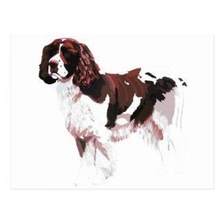 Brown and white Springer Spaniel Postcard