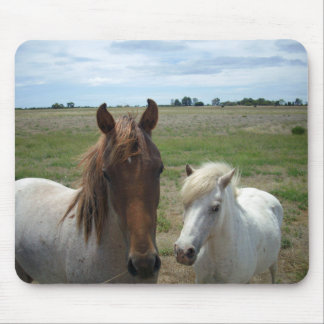 Brown And White Young Horses, Mouse Pad