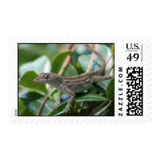 Brown Anole Lizard Postage Stamps Stamps