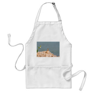 brown anole on holey rock with flower lizard adult apron