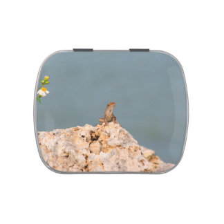 brown anole on holey rock with flower lizard candy tin