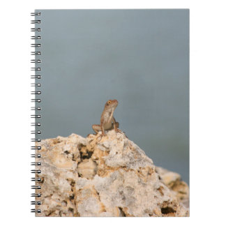 brown anole on holey rock with flower lizard spiral note book