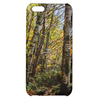 Brown Autumn Forest Landscape, Birch Trees iPhone 5C Cover