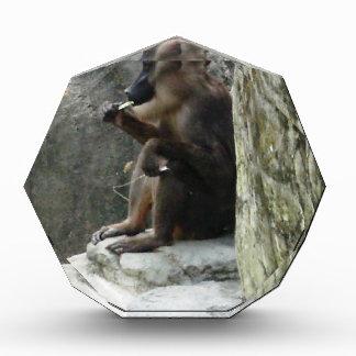 Brown Baboon Acrylic Award
