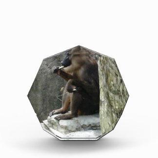Brown Baboon Award