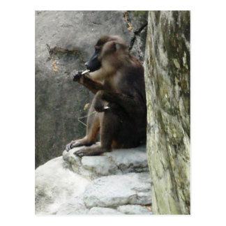 Brown Baboon Postcard