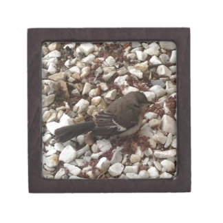 Brown Baby Sparrow On Pebbles Gift Box
