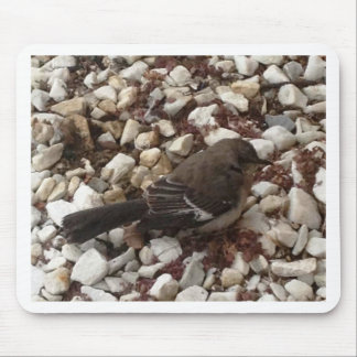 Brown Baby Sparrow On Pebbles Mouse Pad