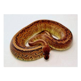 Brown Ball Python Business Card