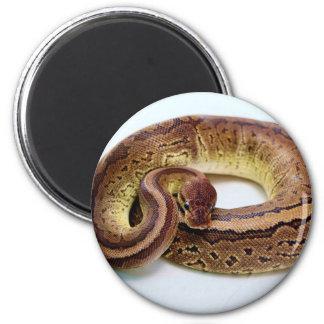 Brown Ball Python Resting Fridge Magnets