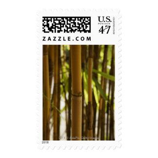 brown bamboo shoot postage
