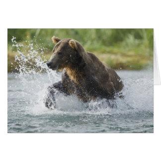 Brown Bear chasing salmon in river Card