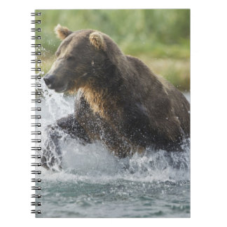 Brown Bear chasing salmon in river Note Book