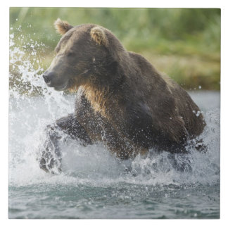 Brown Bear chasing salmon in river Large Square Tile