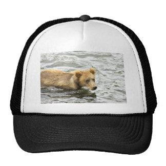 Brown bear cub in water trucker hat