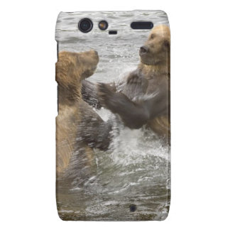 Brown Bear Cubs Playing in Water Droid RAZR Cases