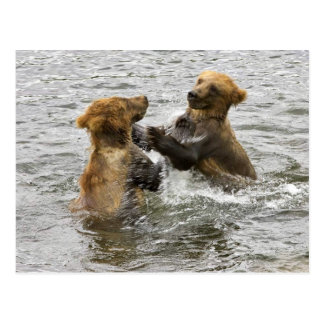 Brown bear cubs playing in water postcard
