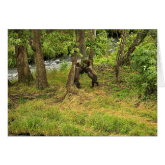 Brown bear cubs wrestling in the woods cards