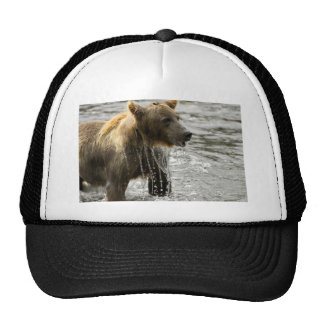 Brown bear emerging from water hats