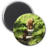 Brown Bear Family Magnet