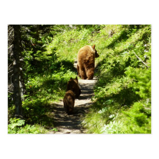 Brown Bear Family Postcard