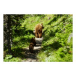 Brown Bear Family Poster