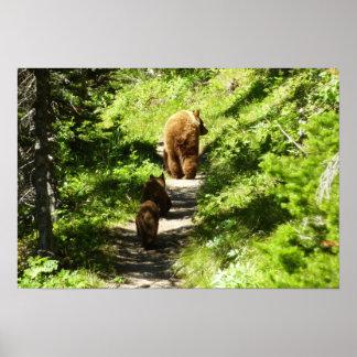 Brown Bear Family Poster