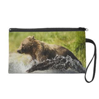 Brown bear, female, fishing for salmon wristlet