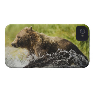 Brown bear, female, fishing for salmon Case-Mate iPhone 4 case