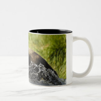 Brown bear, female, fishing for salmon Two-Tone coffee mug
