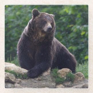 Brown bear glass coaster
