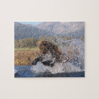 Brown bear, grizzly bear, catching pink salmon, puzzle