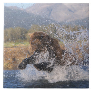 Brown bear, grizzly bear, catching pink salmon, large square tile