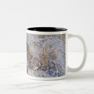 Brown bear, grizzly bear, catching pink salmon, Two-Tone coffee mug