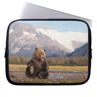 Brown bear, grizzly bear,  in riverbed with computer sleeves