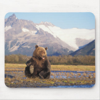 Brown bear, grizzly bear,  in riverbed with mouse pad