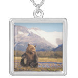 Brown bear, grizzly bear,  in riverbed with square pendant necklace