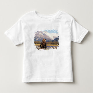 Brown bear, grizzly bear,  in riverbed with shirt