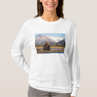 Brown bear, grizzly bear,  in riverbed with T-Shirt
