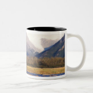 Brown bear, grizzly bear,  in riverbed with Two-Tone coffee mug