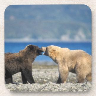 Brown bear, grizzly bear, play on the beach, coaster