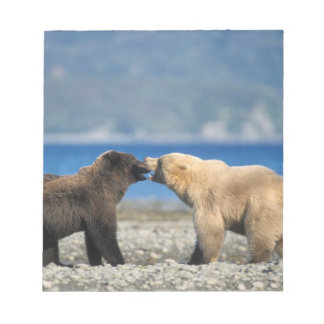 Brown bear, grizzly bear, play on the beach, notepad