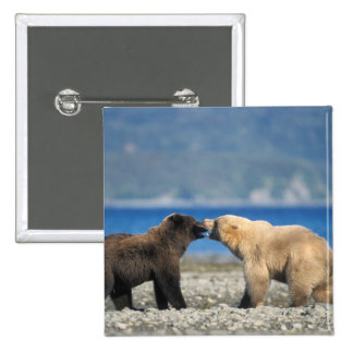 Brown bear, grizzly bear, play on the beach, pinback button