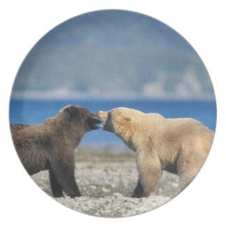 Brown bear, grizzly bear, play on the beach, dinner plate