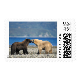 Brown bear, grizzly bear, play on the beach, postage