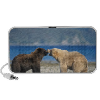Brown bear, grizzly bear, play on the beach, iPhone speaker