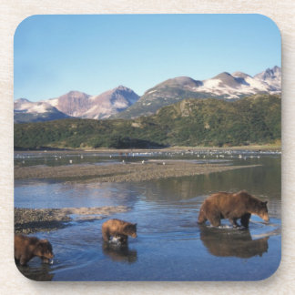 Brown bear, grizzly bear, sow and cubs in coaster