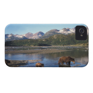 Brown bear, grizzly bear, sow and cubs in iPhone 4 cases