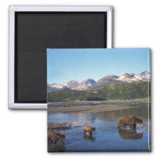 Brown bear, grizzly bear, sow and cubs in magnet