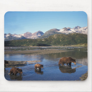 Brown bear, grizzly bear, sow and cubs in mouse pad
